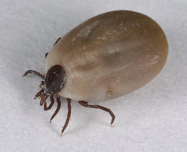 средства от паразитов в организме отзывы