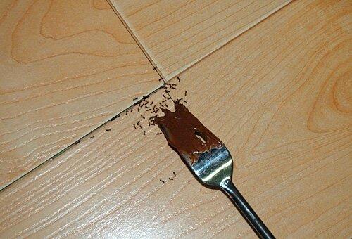 область Омск чем травить муравьев в квартире на куэне сучасній Україні ідеї