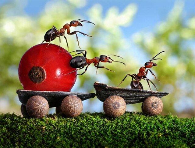 средства от муравьев на дачном участке